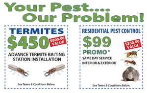 Hornet, Contact Us, Suffolk County Pest Control, Suffolk County, Pest control services, New York, Pest Control, Exterminator, NY, exterminator, bugs, bed bugs, organic pest control, organic exterminator, organic pest, ANTS, TERMITES, BED BUGS, SPIDERS, CRICKETS, MOSQUITOES, BEES, RODENTS, FLIES, MOTHS, FLEAS, BEETLES, TICKS, GNATS, SILVERFISH, CENTIPEDES, LICE, MILLIPEDES, FRUIT FLIES, HORNETS, STINK BUGS, SNAILS, SLUGS