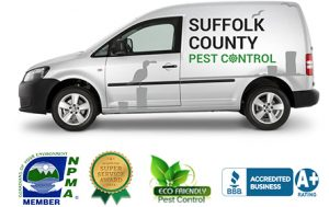 Pest Control Suffolk County Exterminator, Ants can become, Pest Control Services, Contact Us, Suffolk County Pest Control, Suffolk County, Pest control services, New York, Pest Control, Exterminator, NY, exterminator, bugs, bed bugs, organic pest control, organic exterminator, organic pest, ANTS, TERMITES, BED BUGS, SPIDERS, CRICKETS, MOSQUITOES, BEES, RODENTS, FLIES, MOTHS, FLEAS, BEETLES, TICKS, GNATS, SILVERFISH, CENTIPEDES, LICE, MILLIPEDES, FRUIT FLIES, HORNETS, STINK BUGS, SNAILS, SLUGS