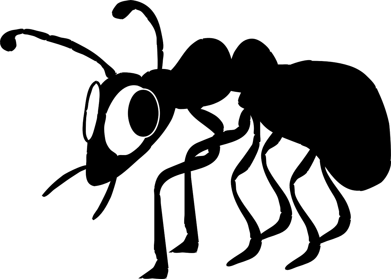 ant control services suffolk county pest control